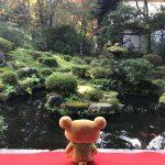 三千院で金色不動明王と紅葉の朱に染まってきました。