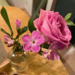 """<span class=""""title"""">【花のサブスク体験ブログ】お花の定期便を頼んだら、おうち時間が華やかに♪</span>"""